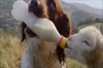 Video - Tiere füttern Tiere