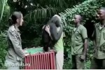 Video - Affe bekommt die Freiheit zurück