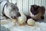 Video - Tierfreundschaften