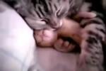 Video - Super liebe Katzen-Mama mit ihrem Baby