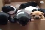 Video - Ein Bauer wollte  einige seiner Hunde-Welpen verkaufen