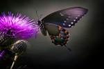 Video - Schmetterlinge