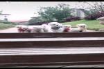 Video - Niedliche Hunde
