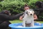 Video - Ordentlich baden